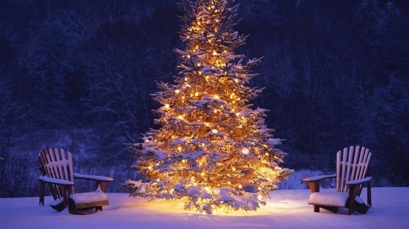 New-Year-Tree-Wallpaper-17