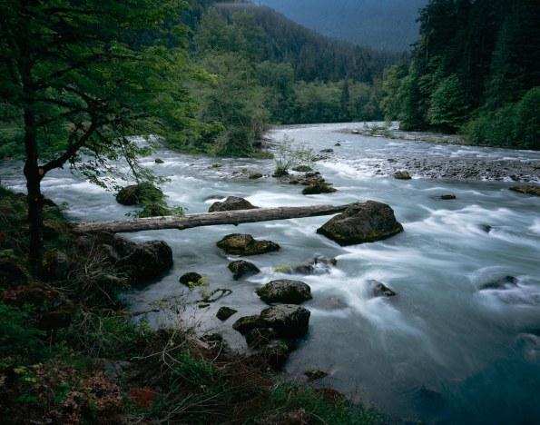 Elwha-River-log-Scott-Church-copy