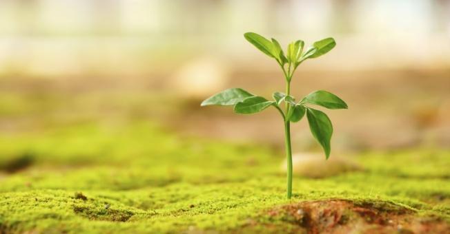13412-new-life-plant-grow-green-hope-wide.1200w.tn